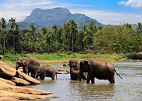 Badende Elefanten Sri Lanka